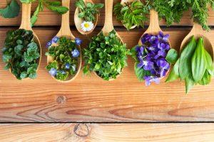 Naturheilkräuter nach der Lehre von hildegard-von-bingen auf einem Tisch